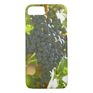 Groupe de raisin cabernet sauvignon dans le coque iPhone 7