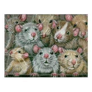 Groupe de rats à la carte postale de la Réunion de