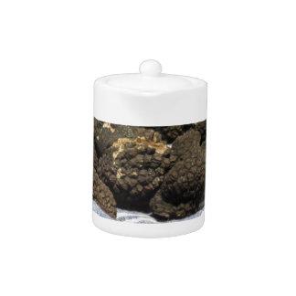 Groupe de truffes noires chères italiennes