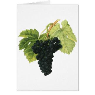 Groupe organique vintage de raisin de vin rouge, carte de vœux