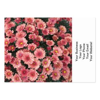 Groupe rose extraordinaire de chrysanthème carte de visite grand format