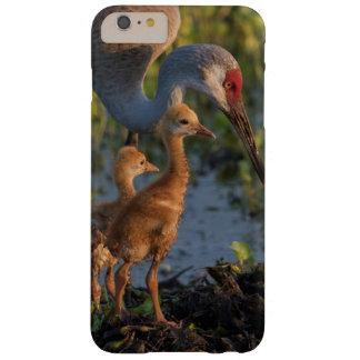 Grue de Sandhill avec des poussins, la Floride Coque iPhone 6 Plus Barely There