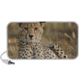 Guépard, jubatus d'Acinonyx, petit animal étendant Haut-parleurs iPod