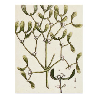 """Gui """"d'un de fines herbes curieux"""", 1782 carte postale"""