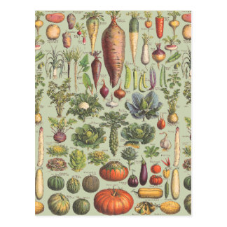 Guide français du jardin carte postale