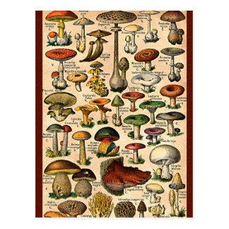 Guide vintage de champignon carte postale