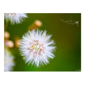 Gwen Photographie - Pissenlit Carte Postale
