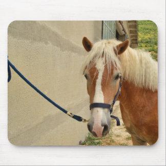 Haflinger-Pferd Tapis De Souris