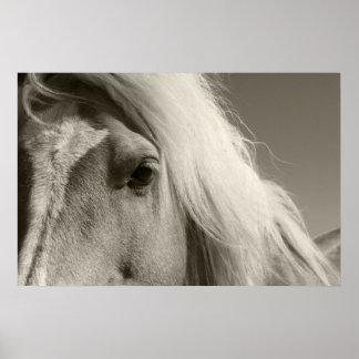 Haflinger portrait - Horse - cheval Posters