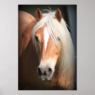 Posters de chevaux sur Zazzle