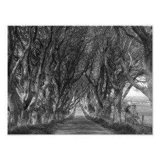 Haies foncées en noir et blanc impressions photographiques