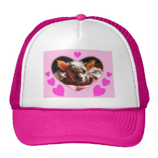 hairless dog hart casquettes