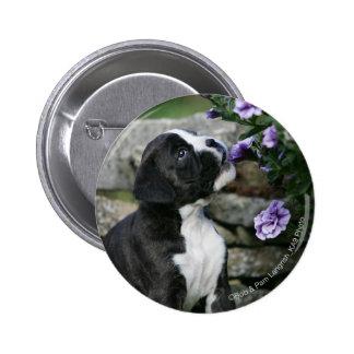 Halètement de chien de boxeur badge