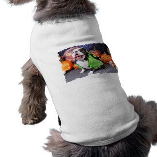 Halloween - bouledogue anglais - transitoire vêtement pour chien