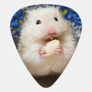 Hamster syrien pelucheux Kokolinka mangeant une Onglet De Guitare