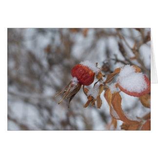 Hanche rose dans la carte d'hiver
