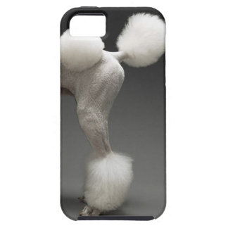 Hanches de caniche, sur l'arrière - plan gris coque tough iPhone 5