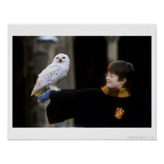 Harry et Hedwig 3 Poster