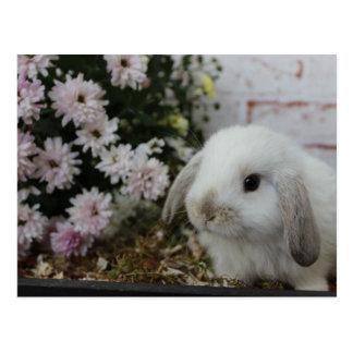 Häschen blanc, lapins avec des fleurs lapin de carte postale