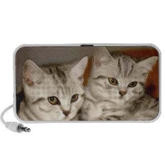 Haut-parleurs de griffonnage de chatons