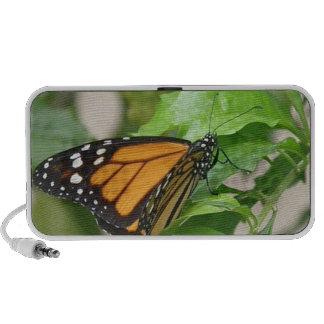 Haut-parleurs de papillon de monarque