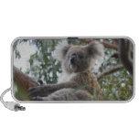 Haut-parleurs de Portable de koala