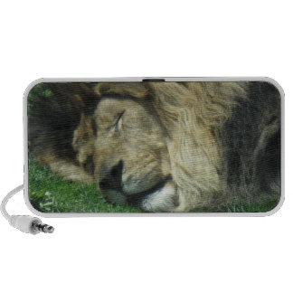 Haut-parleurs paresseux de lion
