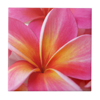 Hawaïen rose de fleur d'Hawaï de Frangipani de Petit Carreau Carré