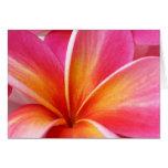 Hawaïen rose de fleur d'Hawaï de Frangipani de Plu Cartes De Vœux