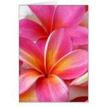 Hawaïen rose de fleur d'Hawaï de Frangipani de Plu Carte