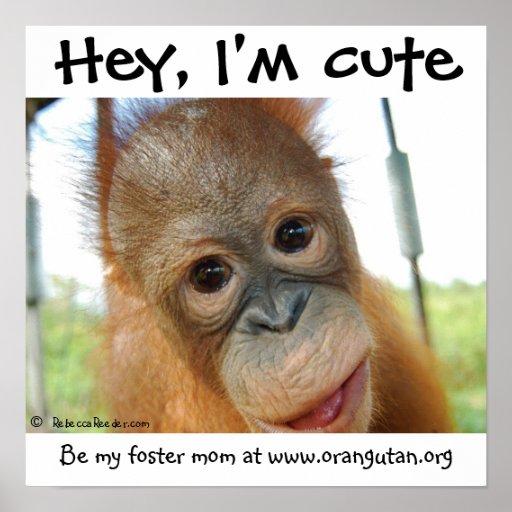 Hé, je suis orang-outan mignon de bébé poster