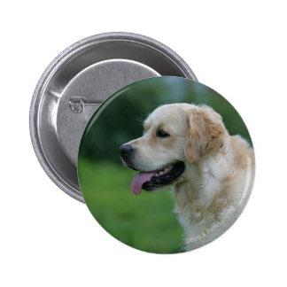 Headshot 2 2 de golden retriever badges
