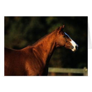 Headshot de cheval de pur sang carte de vœux