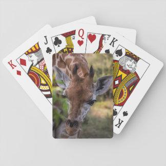 Headshot d'une girafe cartes à jouer