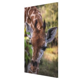 Headshot d'une girafe toile