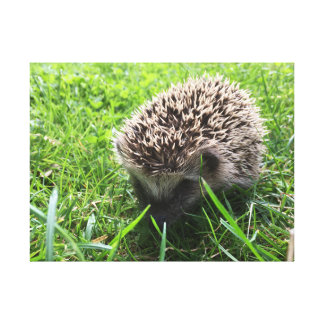 hedgehog painting toile