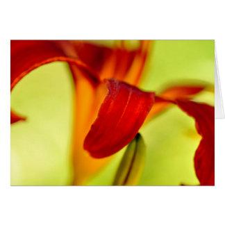Hémérocalle rouge cartes de vœux