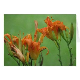 Hémérocalles oranges carte de vœux