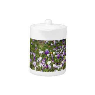 Herbe de crocus de gisement de fleurs au printemps