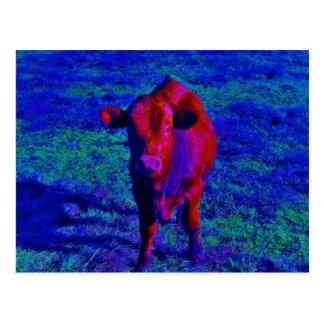 Herbe de pourpre de vache à bébé carte postale
