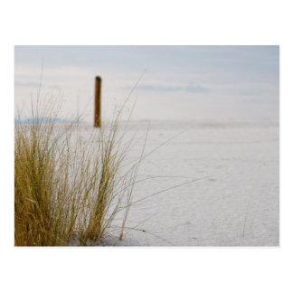 Herbes des sables blancs - carte postale
