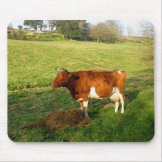 Heure du repas pour la vache à Guernesey Tapis De Souris