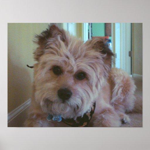 Heureux le chien de merveille posters