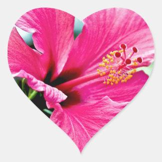 Hibiscus rose vif sticker cœur
