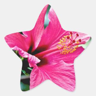 Hibiscus rose vif sticker étoile