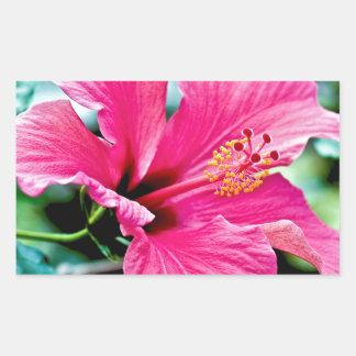 Hibiscus rose vif sticker rectangulaire