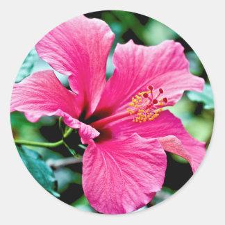 Hibiscus rose vif sticker rond