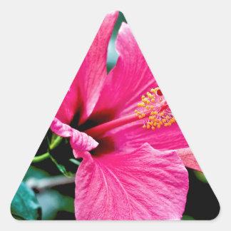 Hibiscus rose vif sticker triangulaire