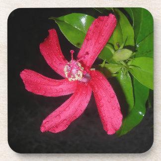 hibiscus rouge sous-bock