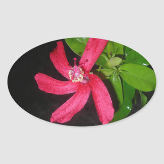 hibiscus rouge sticker ovale